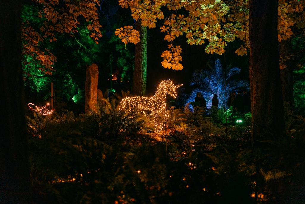 Las Luces des Real Jardín Botánico - Bosque de las Hadas ©Christmas Garden